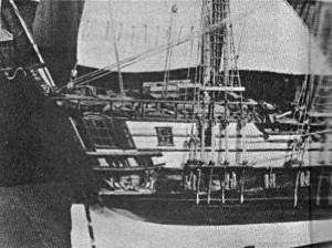Abb. 5 Schwedenkaper; achtere Seitenansicht